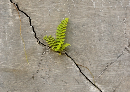 persistent nature